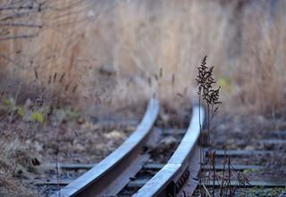 Northern Spur Preserve Rails