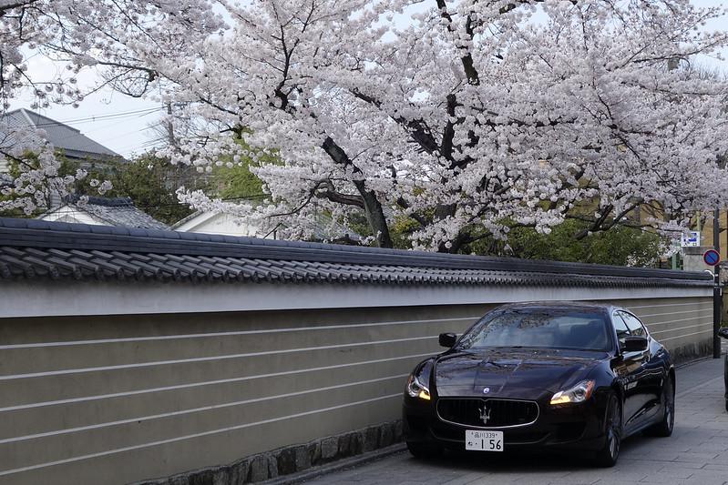 桜の京都 建仁寺