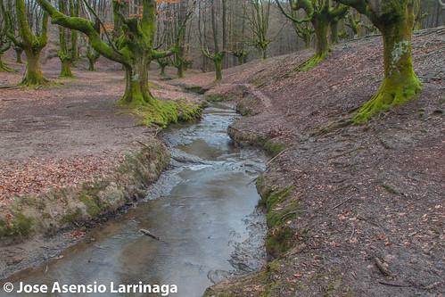 Hayedo de Otzarreta Parque Natural de Gorbeia 2015 #DePaseoConLarri #Flickr -048