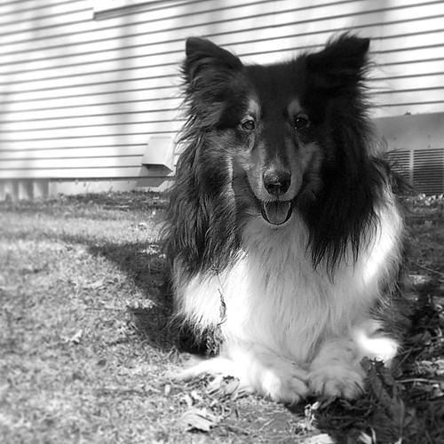 Jasper in spring