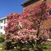 Ombré blossoms