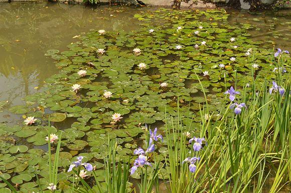 內雙溪自然中心33