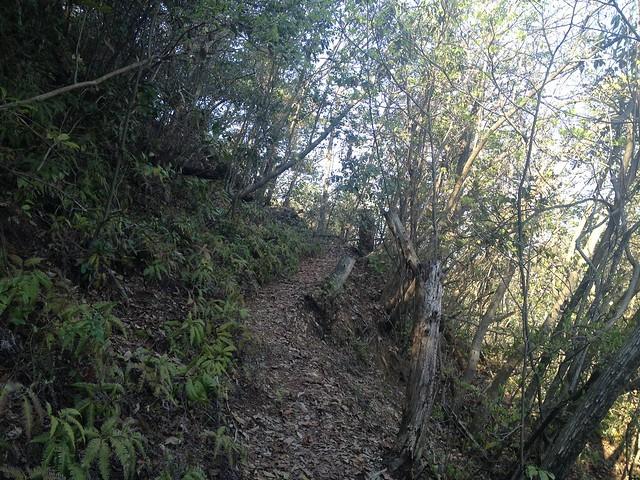古城山 登山道