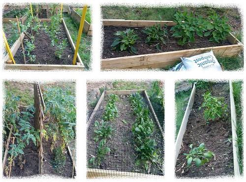 gardenbed1