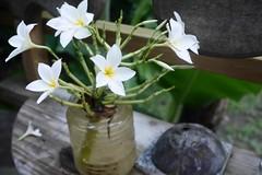 火, 2016-07-12 17:28 - プルメリアみたいな白い花