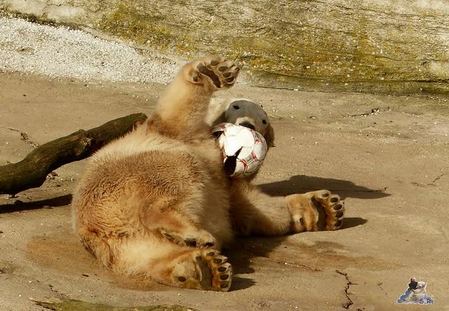 Zoo am Meer 07.03.2015   25