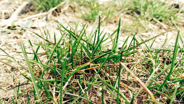 Photo a day Spring Grass