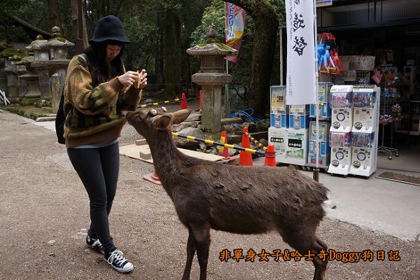 日本奈良公園東大寺16