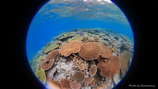 石垣島の極上サンゴ!