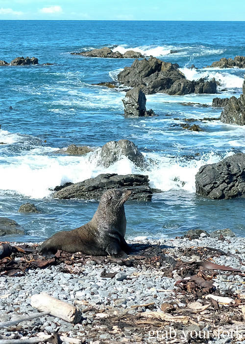 Wild seal colony at Red Rocks on the Seal Coast Safari