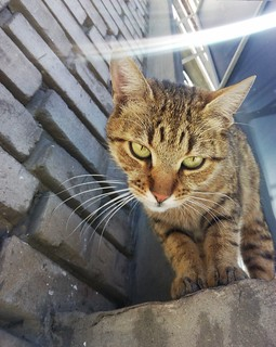 Sweetie cat Nucia