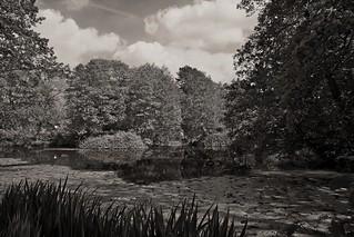 Pond view...