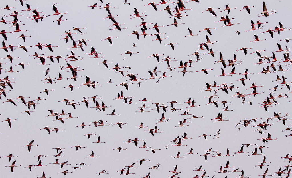IMG_2015_03_22_011131flamingo sky crop