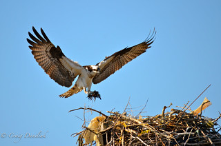 Nest Repair