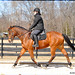 Sunny springtime afternoon ride with the Wizard by Rock and Racehorses