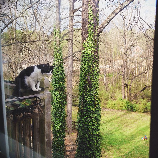 My #kitchenwindowview ????our cat Toby scared me. The drop would be around 25 or more feet. He loves sitting on the ledge of this deck and tries to catch bumblebees. #blackandwhitecats