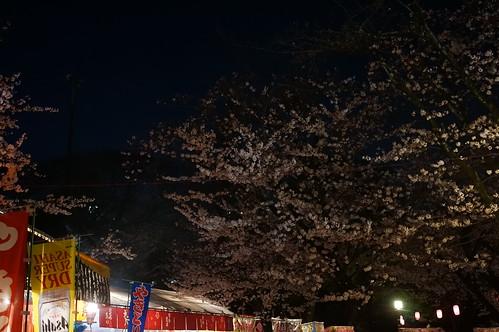 Chiba Inohana Sakura festival 04