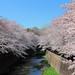 春の川 by * Yumi *