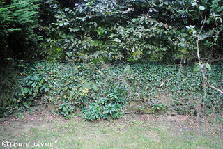 Side garden wall before