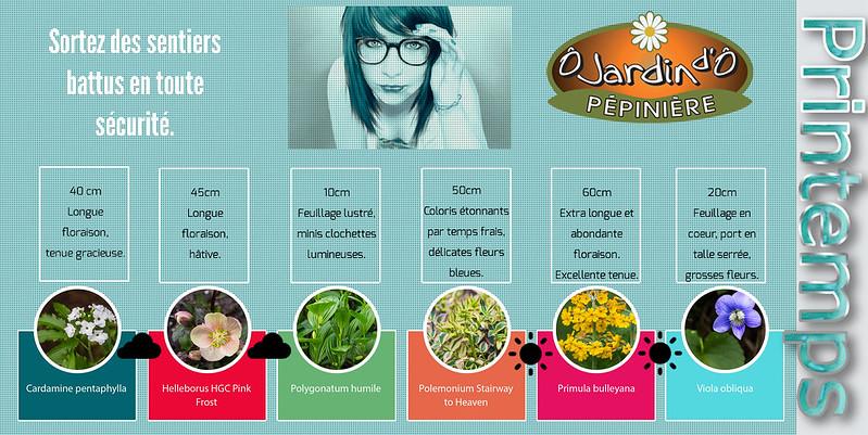 Les 6 plantes qu'on va particulièrement promouvoir ce printemps 16859495576_753db7f25a_c