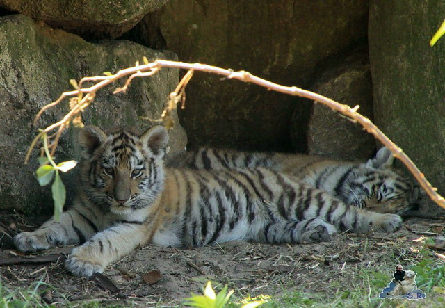 Zoo Eberswalde 04.06.2011 187
