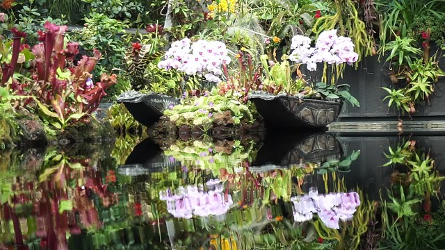 Pond at Cloud Forest