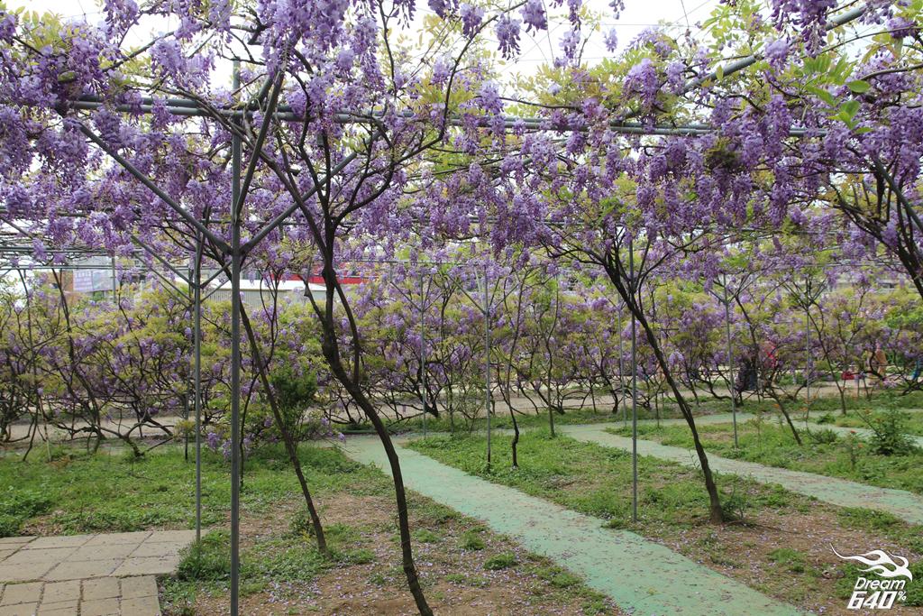 淡水紫藤咖啡園16
