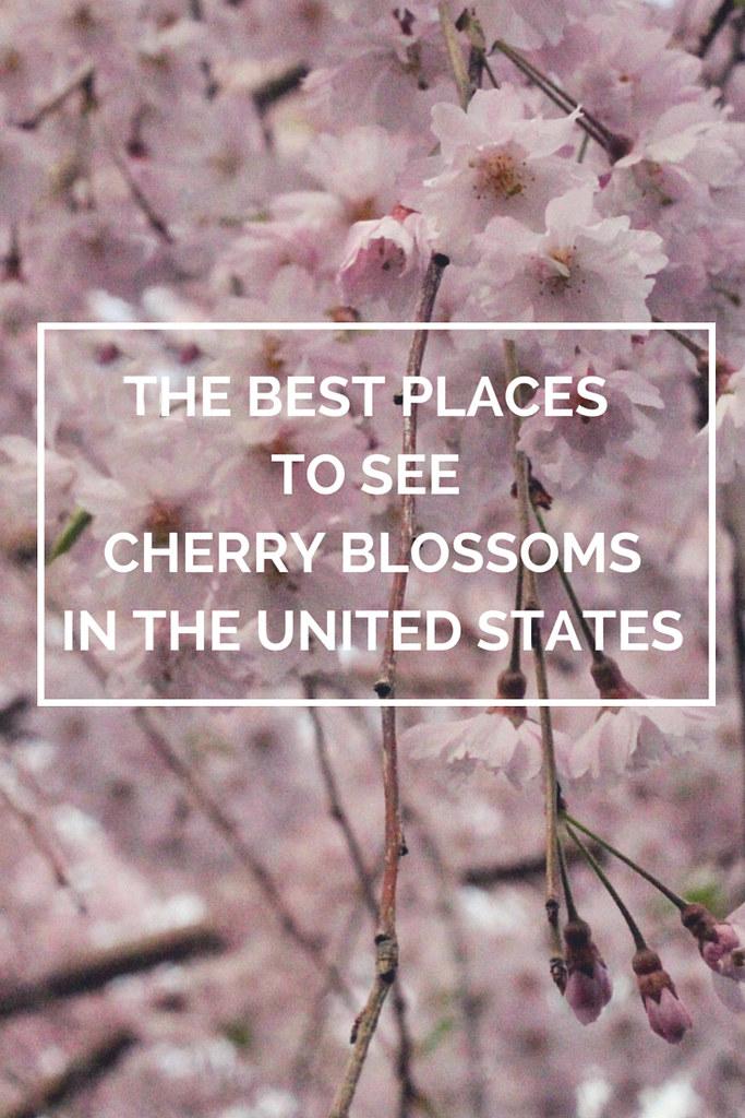 cherry-us-pin