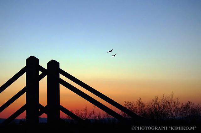 白鳥渡る鉄橋1