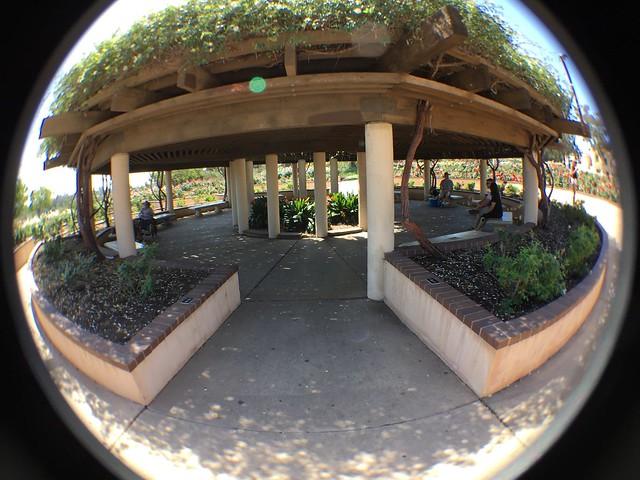 Rose Garden - Balboa Park