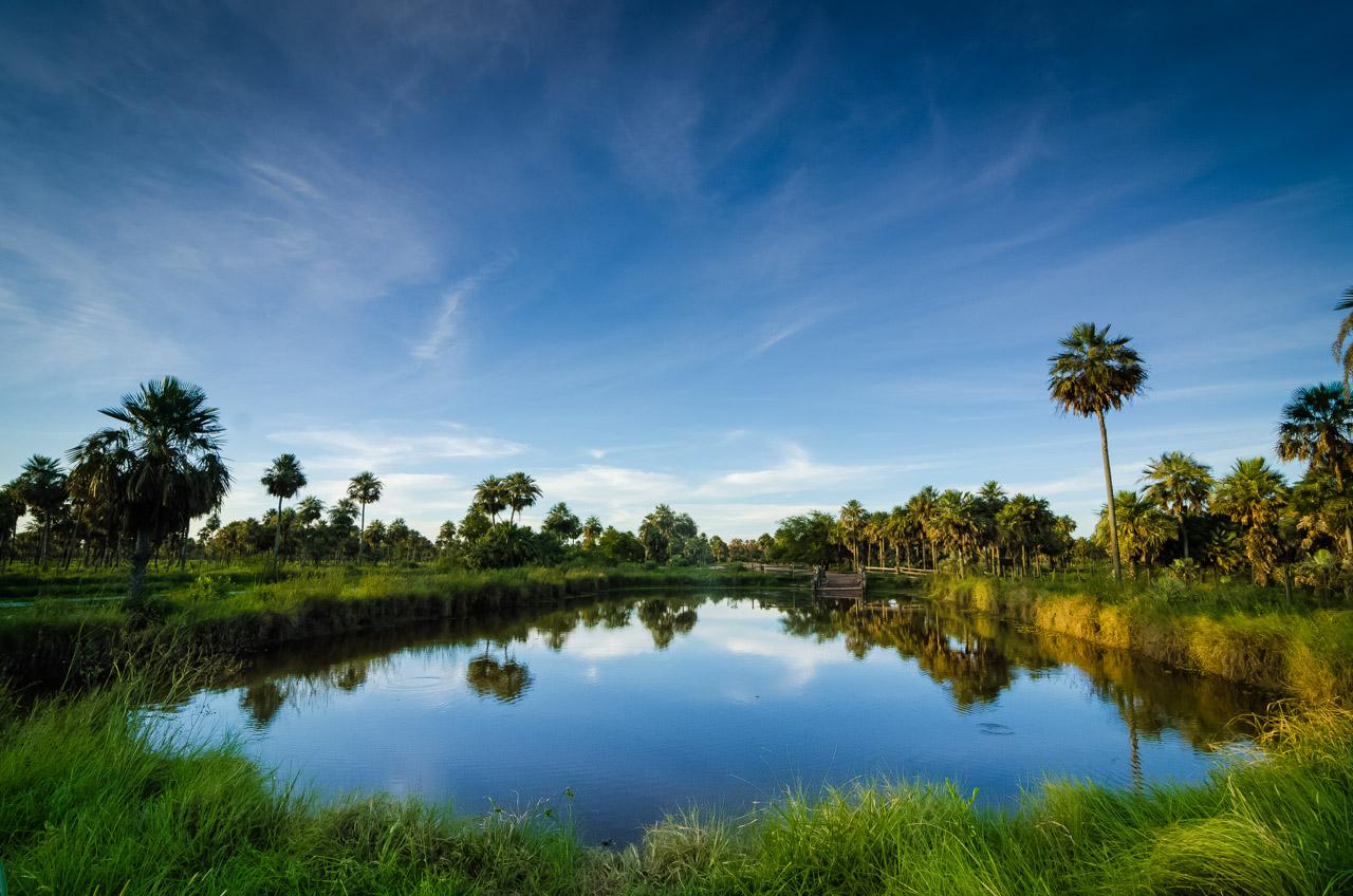 """A una distancia de 5 kilómetros aproximadamente, existe un tajamar, lugar donde el ganado y los demás animales silvestres toman el agua. En esta pequeña laguna viven """"yakarés"""" y algunos peces como el conocido """"tare'yi"""" de interesante tamaño y peso que soprende. (Elton Núñez)."""