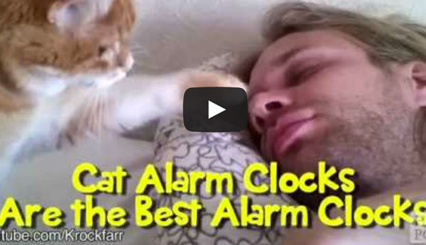 cat-alarm-clocks