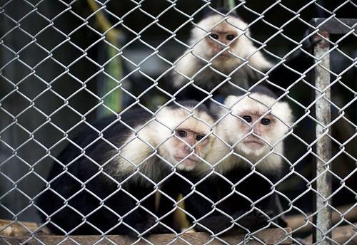 COLOMBIA-ANIMALS-WILDLIFE-RELEASE