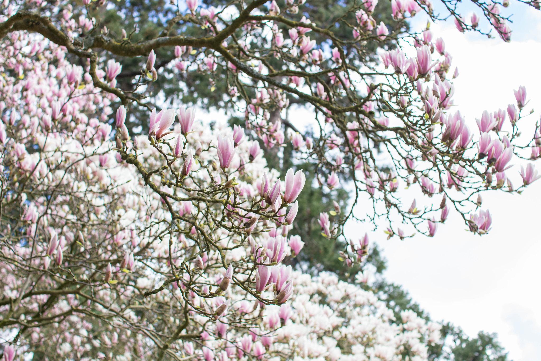 printemps -43
