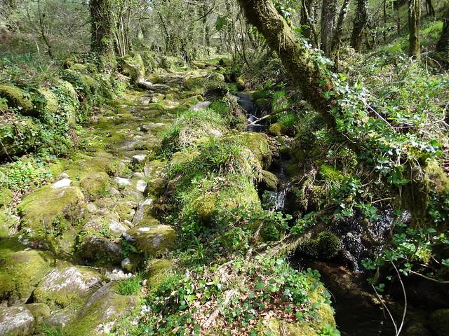 Camino en la ruta Tras os Pasos do río Barbeira - Ruta da Liberdade
