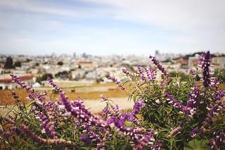 San Francisco Springtime at Peralta Mini Park