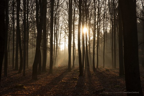 morning trees sun nature netherlands forest sunrise photography rays sal2470z sonyslta99