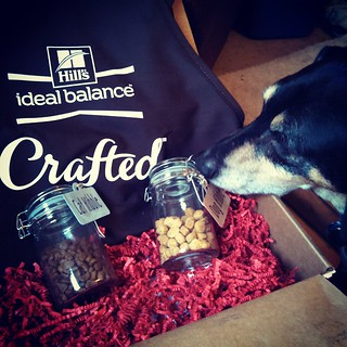 Tut shows you what's inside the box... We are very happy to be a part of this #InspiredByCrafted campaign with @hillspet and @blogpaws Stay tuned to learn more on the blog! #sponsored