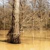 Delta National Forest. Bottomland hardwoods. #mississippi #delta #nationalpark