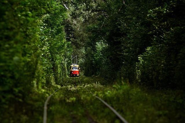 Трамвай-в-Пуще-Водице-лето