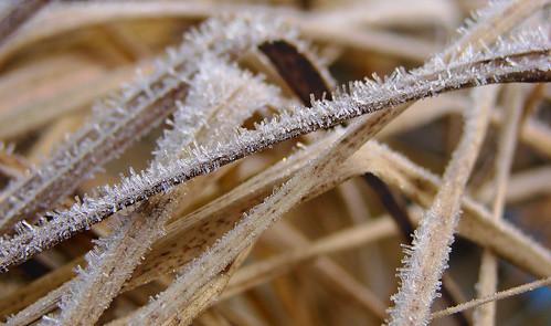 autumn winter grass closeup frozen frosty latvia simple detailed mcro zaķumuiža