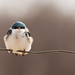 Bird on a wire by Chizuka2010