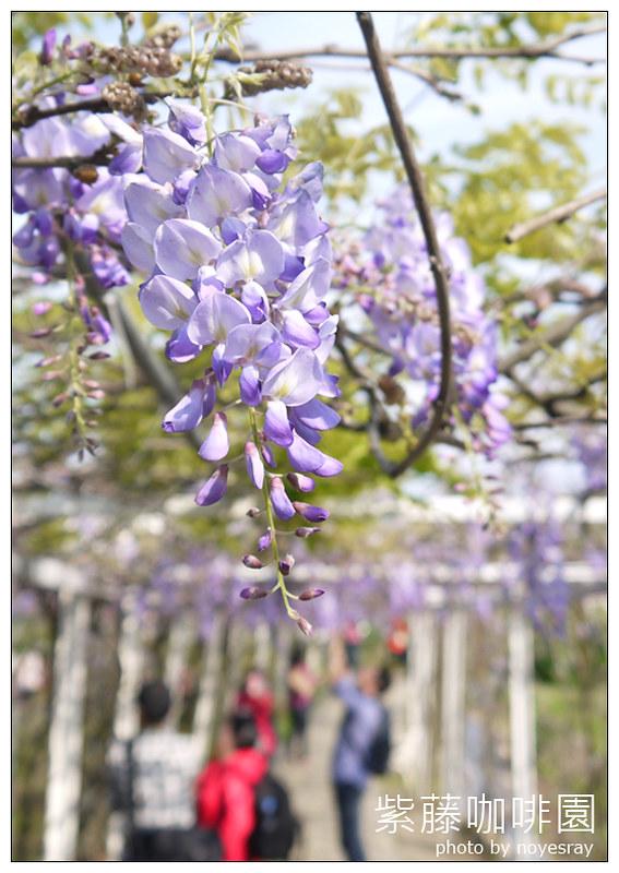 紫藤咖啡園 11