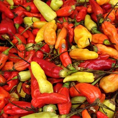 bell pepper(0.0), plant(0.0), paprika(1.0), cayenne pepper(1.0), chili pepper(1.0), vegetable(1.0), serrano pepper(1.0), tabasco pepper(1.0), peppers(1.0), bell peppers and chili peppers(1.0), italian sweet pepper(1.0), bird's eye chili(1.0), peperoncini(1.0), produce(1.0), food(1.0), pimiento(1.0), malagueta pepper(1.0), jalapeã±o(1.0), habanero chili(1.0),