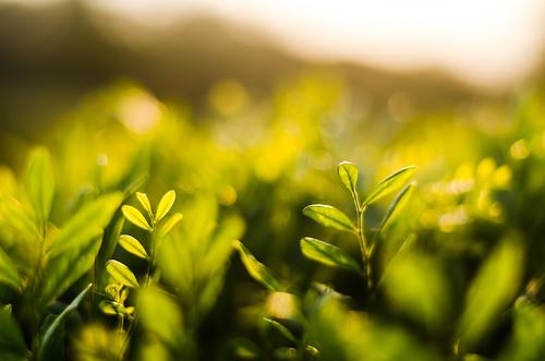 sunlight green nature 50mm nikon bokeh agra dreamland mehtaabbagh