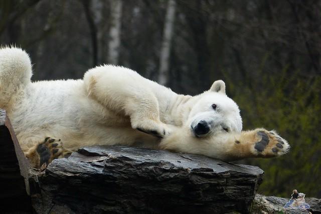 Tierpark Berlin 21.03.2015  233