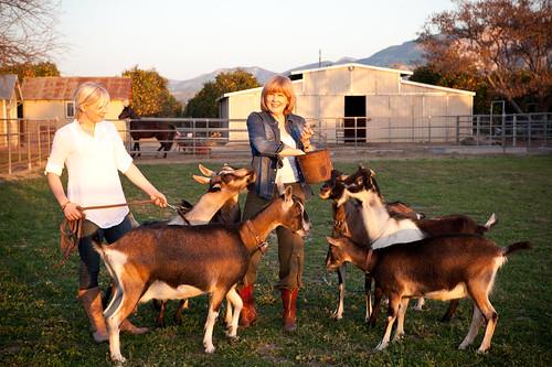 Chivas Farm