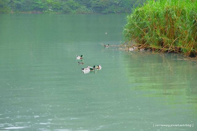 梅花湖 (23)
