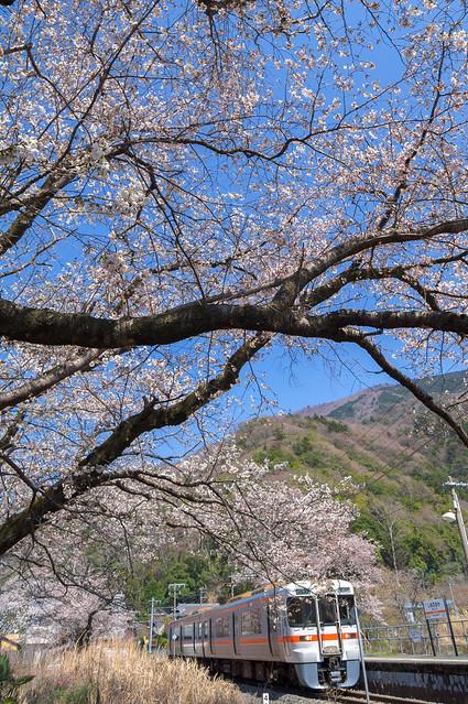 塩之沢駅の桜
