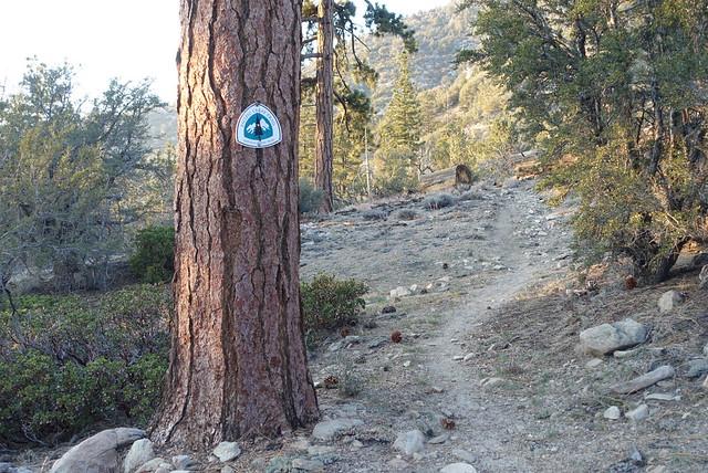 Trail, m241